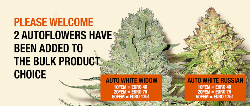 Please Welcome: 2 Autoflowers Have Been Added To The Bulk Product Choice.